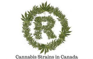 Cannabis Strains in Canada