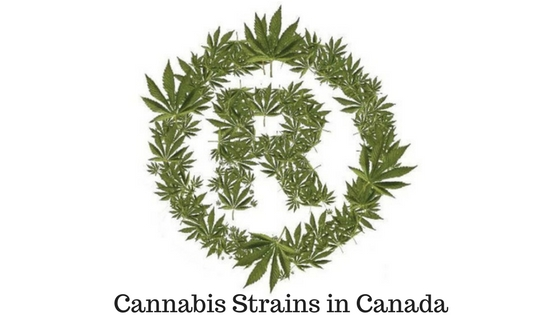 Cannabis Strains in Canada